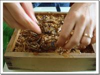 [画像]椎茸をのせていきます。