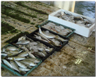 [画像]魚